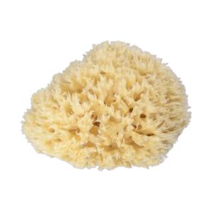 Sponge Traders Mořská houba Honeycomb 1 ks, střední